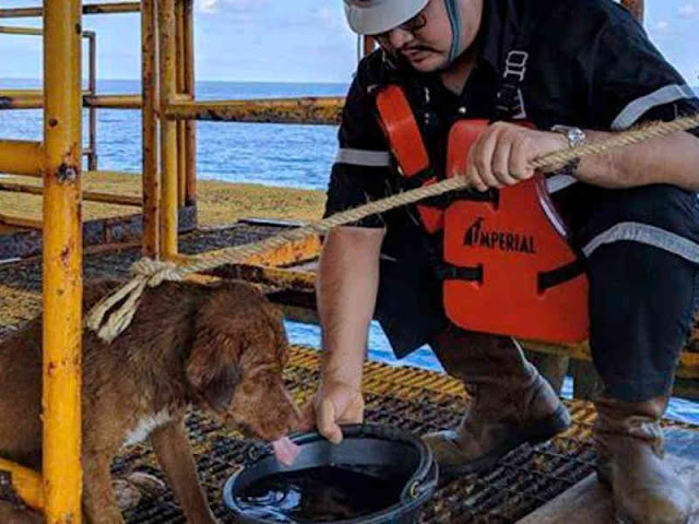 Dog Rescued Swimming 220 KM off Gulf of Thailand