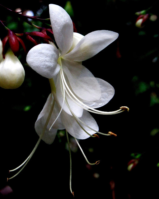 White to Grow photo by Beth Ann Strub