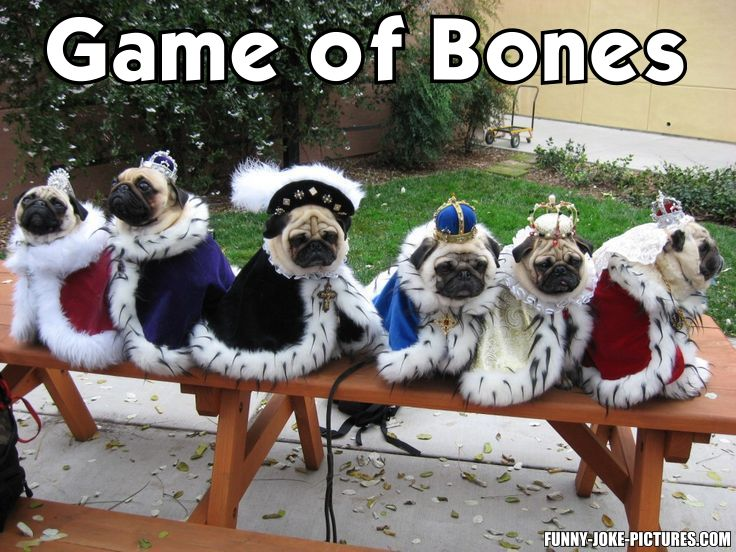 Funny Game of Bones Dog Meme Joke Picture
