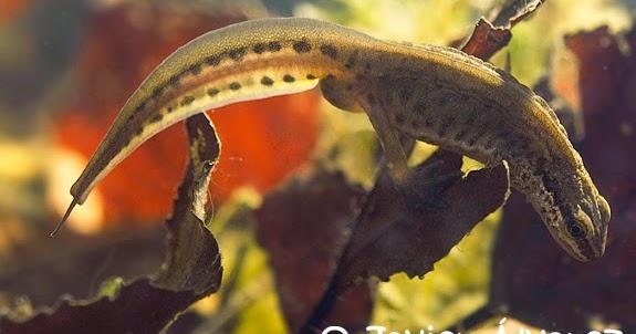 H P Reptiles Anfibios y Reptiles de...
