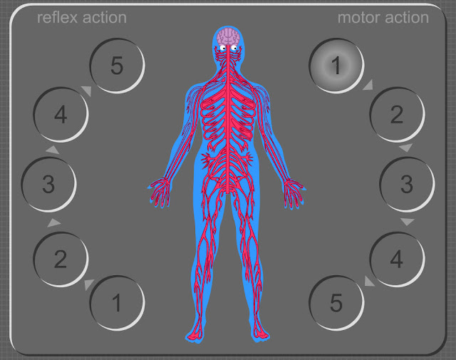 http://www.rigb.org/education/games/human-body/nerve-wrecker