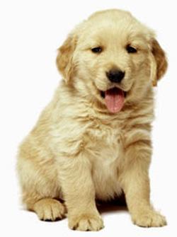 increíble perrito