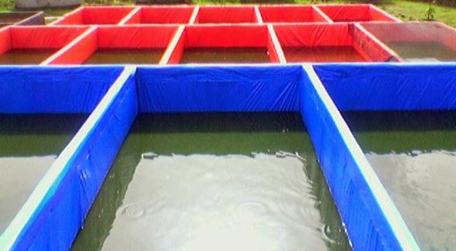"<src img=""kolam terpal kotak.jpg"" alt=""kolam terpal kotak"">"