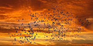 uno stormo di uccelli al tramonto