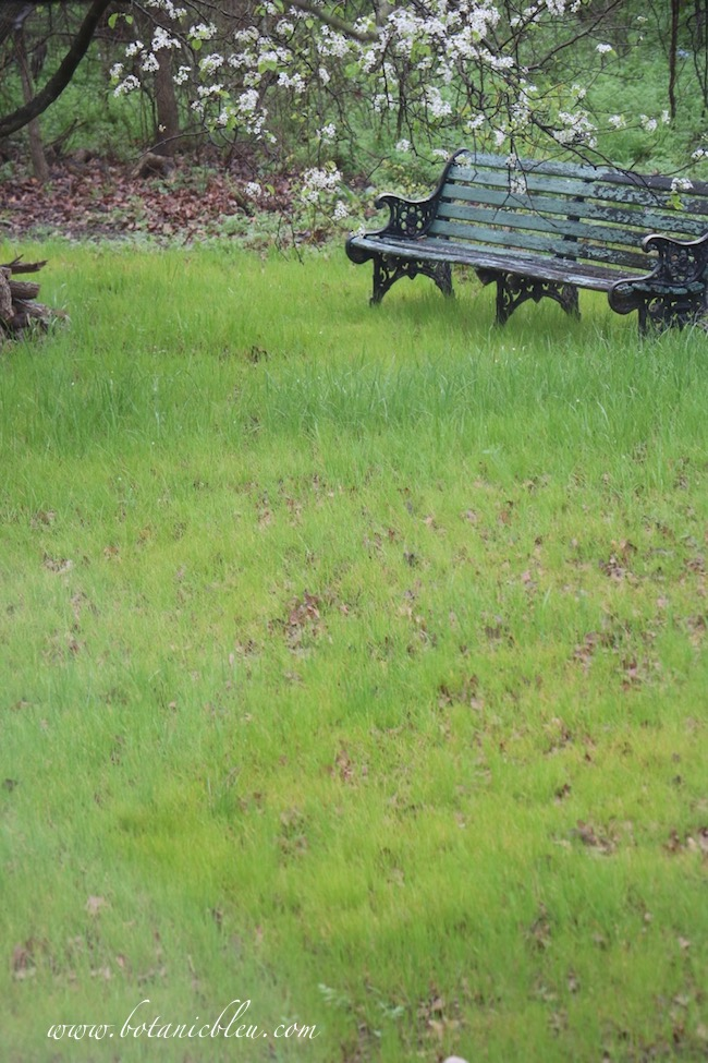 Backyard rye grass meadow in early spring with vintage park bench