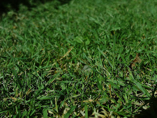 Cut grass holiday proof your garden Green Fingered Blog
