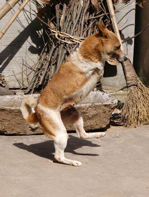 Dogs Walking on Two Legs