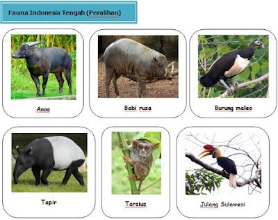 contoh fauna Daerah Peralihan