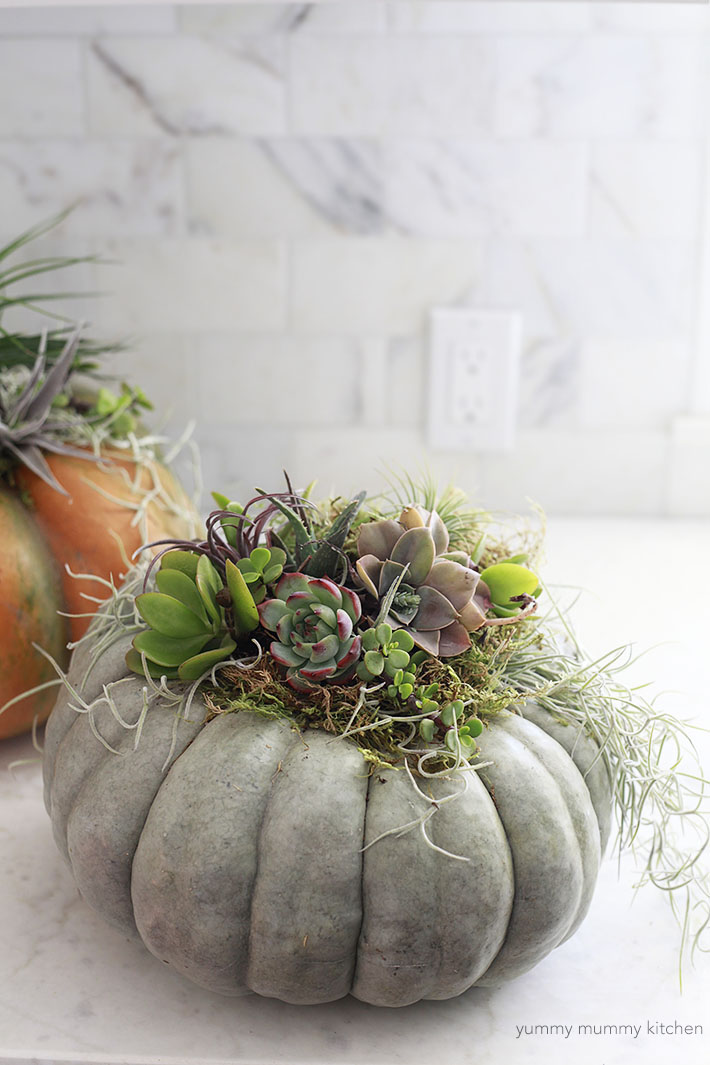 Pumpkins topped with succulents make a beautiful and easy fall centerpiece!