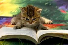 gambar kucing baca buku