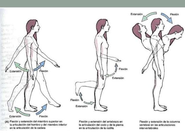 AnatoManiacos: Términos de movimiento anatomía humana
