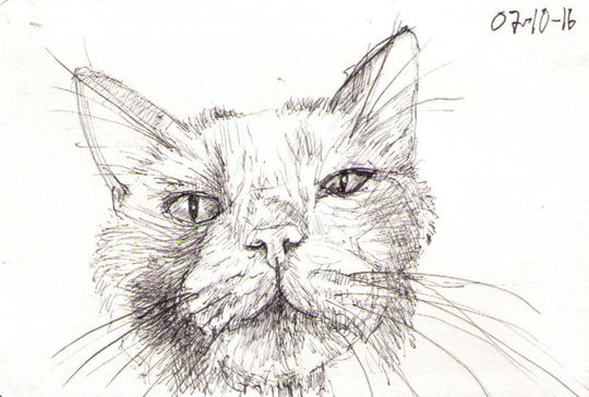 cat sketch drawing