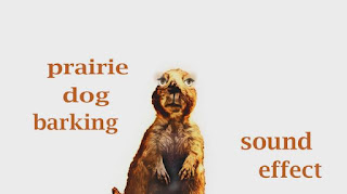 how prairie dog sounds