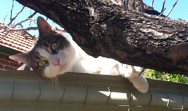Minky-cat
