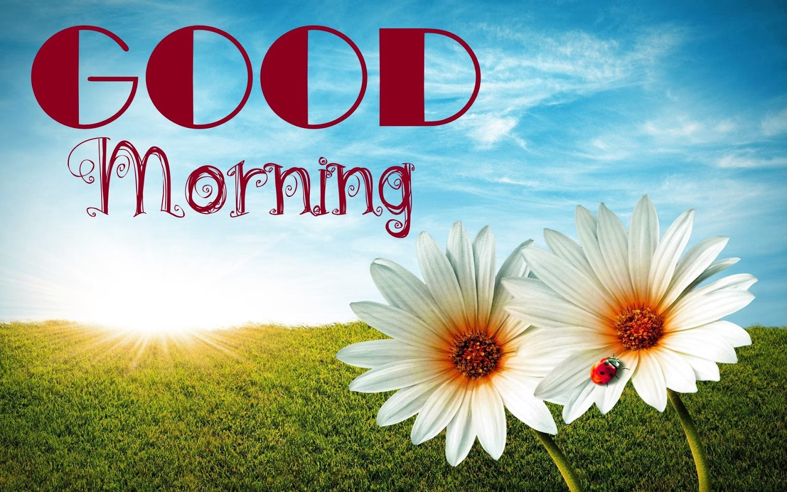Images for good morning 30 free download new 2017 latest good morning wishes hd wallpapers greetings backgrounds m4hsunfo