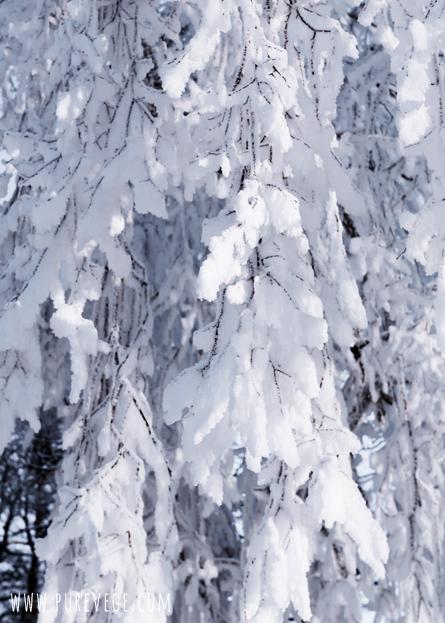 5-Winter