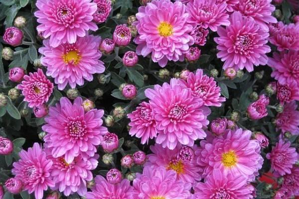 Gak Hanya Lavender, 8 Bunga Ini Ternyata Mampu Mengusir Nyamuk