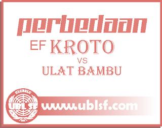 Perbedaan EF Kroto dan Ulat Bambu untuk Kacer