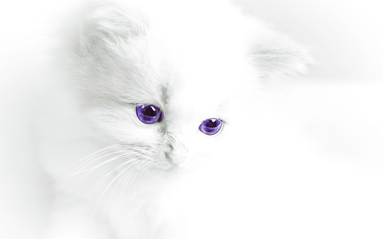 White Cats Wallpaper