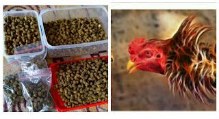 Cara Membuat Jamu Khusus Ayam bangkok paling jitu