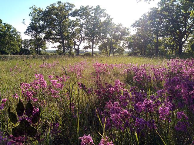 Suede-ile-Oland-sodra-gedra-paysage-fleuri