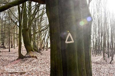 Geschützte Bäume