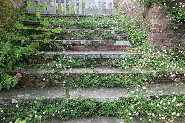 More Erigeron steps at Great Dixter