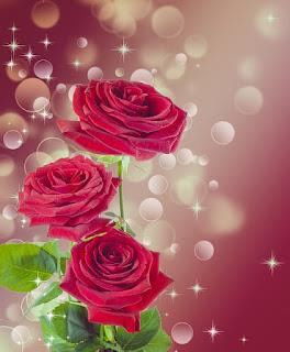 background bunga mawar merah