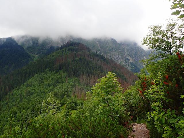Końcówka szlaku na Sarnią Skałę