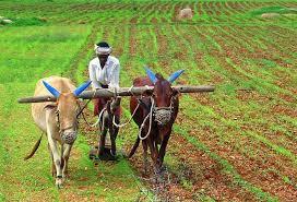 farmer palmistry