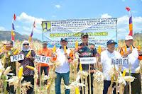 <b>Didampingi Kepala BWS NT1, Wabup Bima Panen Raya Jagung Hibrida</b>