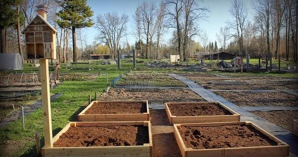 What Kind Soil Buy Vegetable Garden