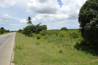2 Farms with productive Land,Located at Tanga Nearby Main Road 20 Acres each and Selling Price Tsh.300 Million each.