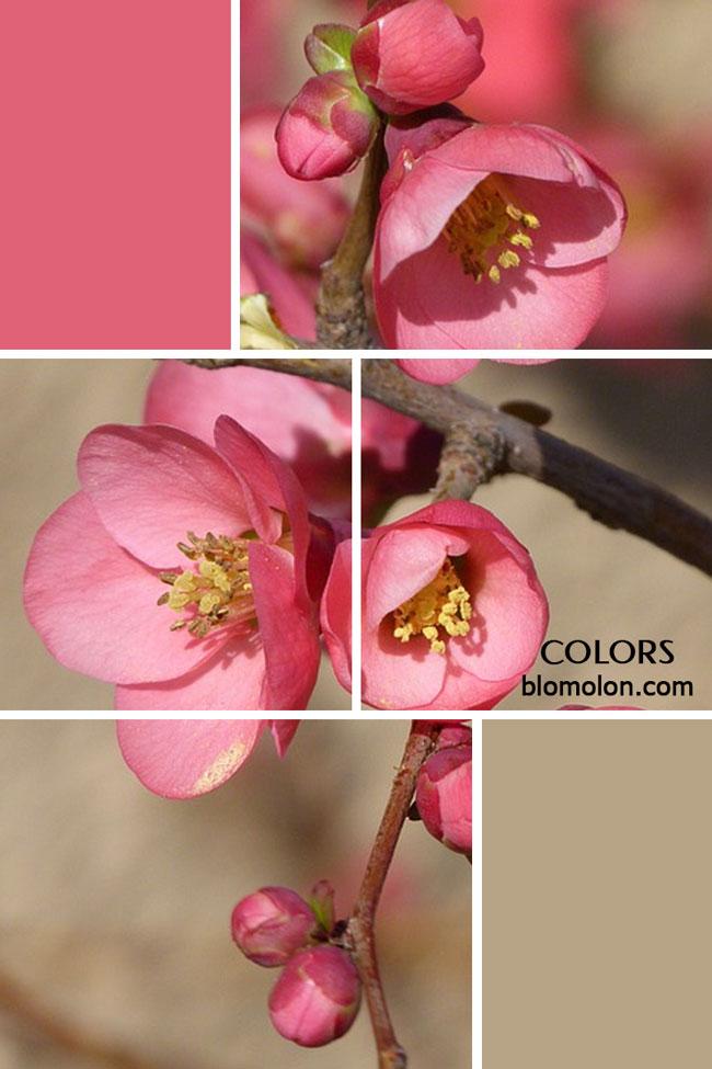 paletas_de_colores_personalizados_imagen