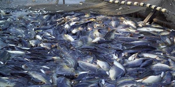 Φρέσκο ψάρι