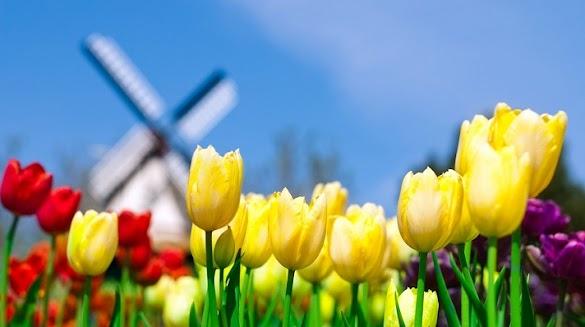 6 Bunga Terindah di Dunia dan Maknanya yang Menakjubkan