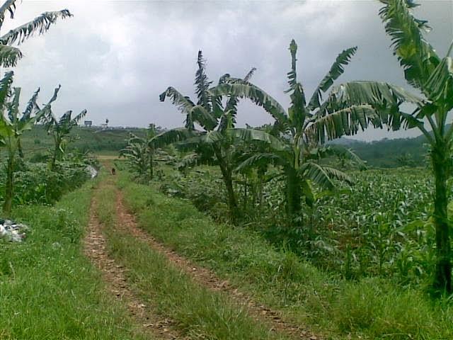 Foto(5230) Jual Tanah luas 25 Ha, Lokasi Cipanas-sukaresmi Jual tanah di cipanas jual tanah di puncak jual tanah di taman bunga nusantara