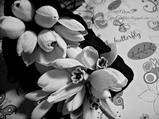 """Wikipedia: """"Ghiocelul (Galanthus L.; din limba greaca: gala - lapte, anthos - floare) este un gen de plante bulboase din familia Amaryllidaceae, plante care înfloresc printre primele la începutul primăverii.  Cel mai reprezentativ membru al genului Galanthus este Ghiocelul comun (Galanthus nivalis).  Ghioceii nu trebuie confundaţi cu 2 plante asemănătoare, luşca (Leucojum vernum) şi ghiocelul bogat (Leucojum aestivium); acestea sunt mult mai mari şi au toate cele şase petale de aceeaşi mărime, deşi unele specii de Galanthus au segmentele interioare de aceeaşi mărime cu cele exterioare."""""""