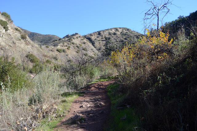 trail in a small canyon