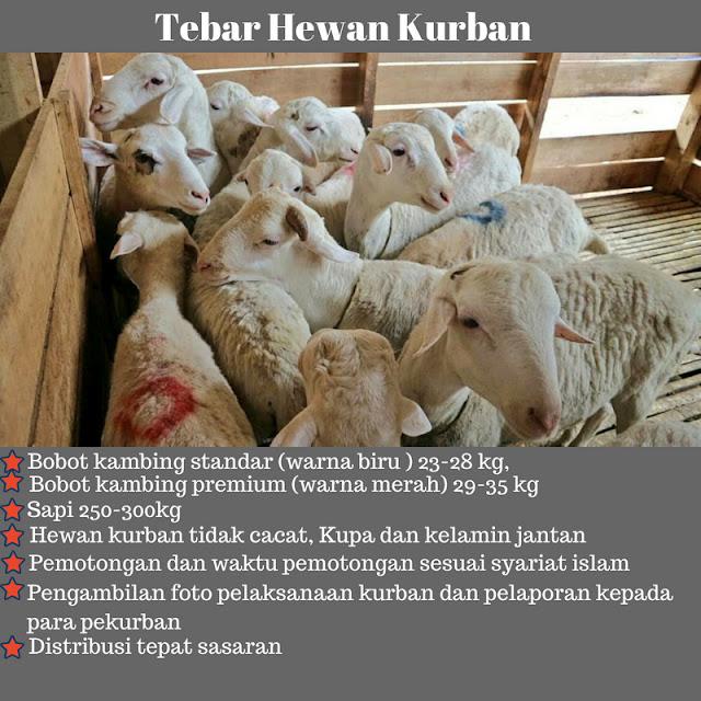 daging kurban disebar ke seluruh indonesia untuk kesejahteraan sosial