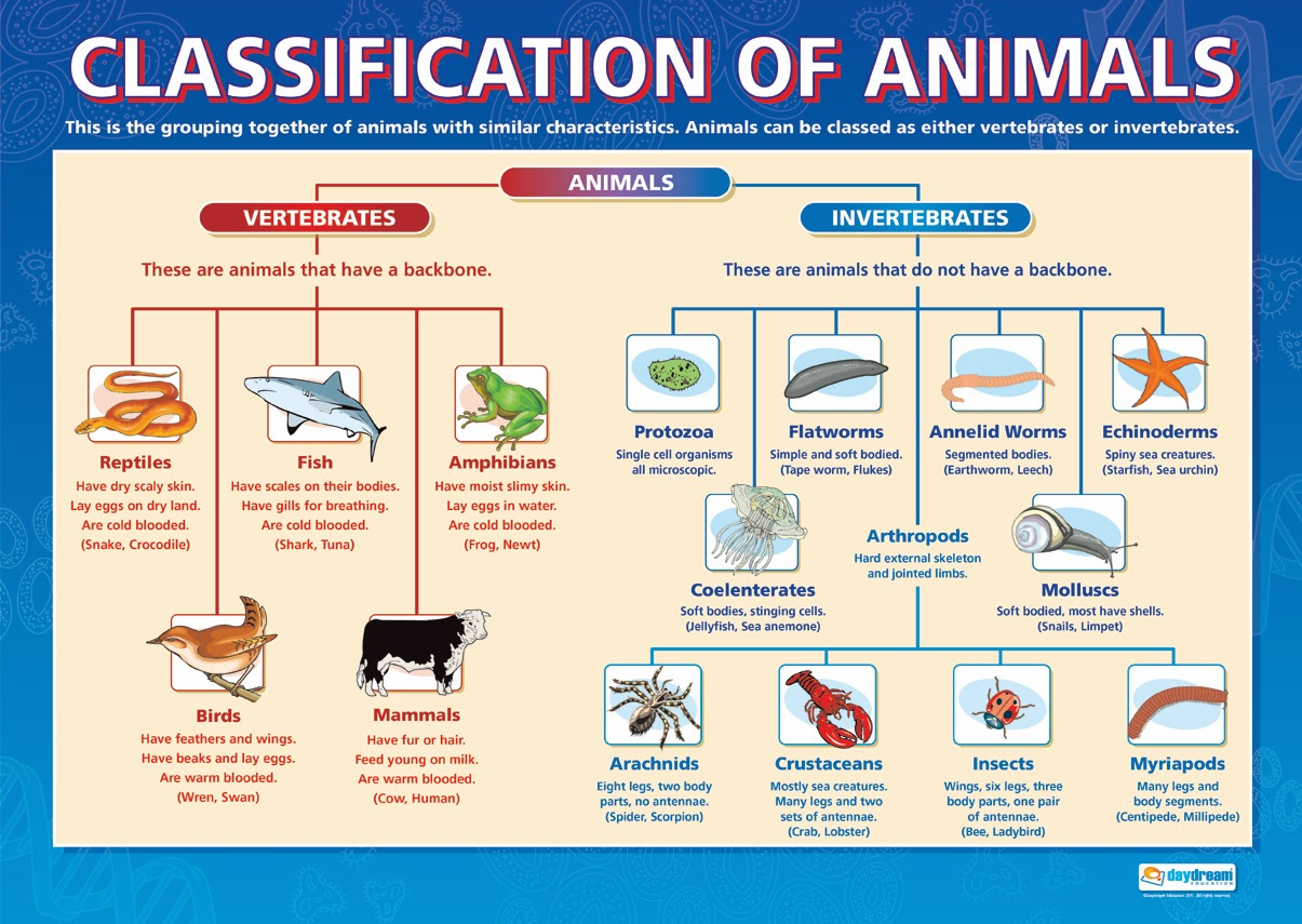 Ana S English Classes Science Animals