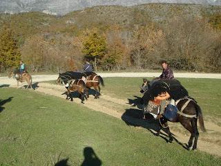 Albania, Zagoria, Riitta reissaa, Horsexplore