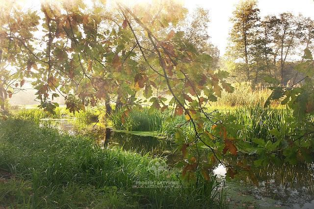 Jesień w parku w Gołuchowie
