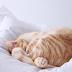 Manger plus sain et naturel... aussi pour les chats ! Préparer à manger à son chat : recettes maison naturelles et simples