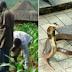 Mutum 250 sun mutu a Gombe da Plateau sakamakon rashin maganin cizon maciji