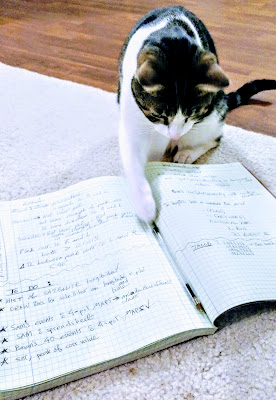 My son Fuji who happens to be a cat, studying from my lab notebook during my PhD