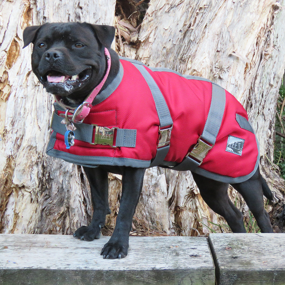 Top 16 Winter Warmers for your Dogs | Australian Dog Lover