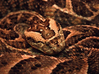 Reptiles Snake Normal Resolution HD Wallpaper 9