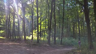 őszi táj, őszi kirándulás, erdő ősszel, erdő, túrázás, bakony, bakonyi erdő