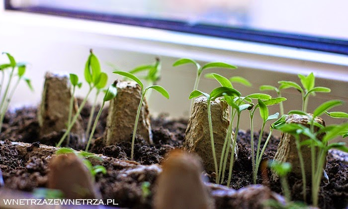 Domowe Pomidory Wnętrza Zewnętrza Blog Wnętrzarski